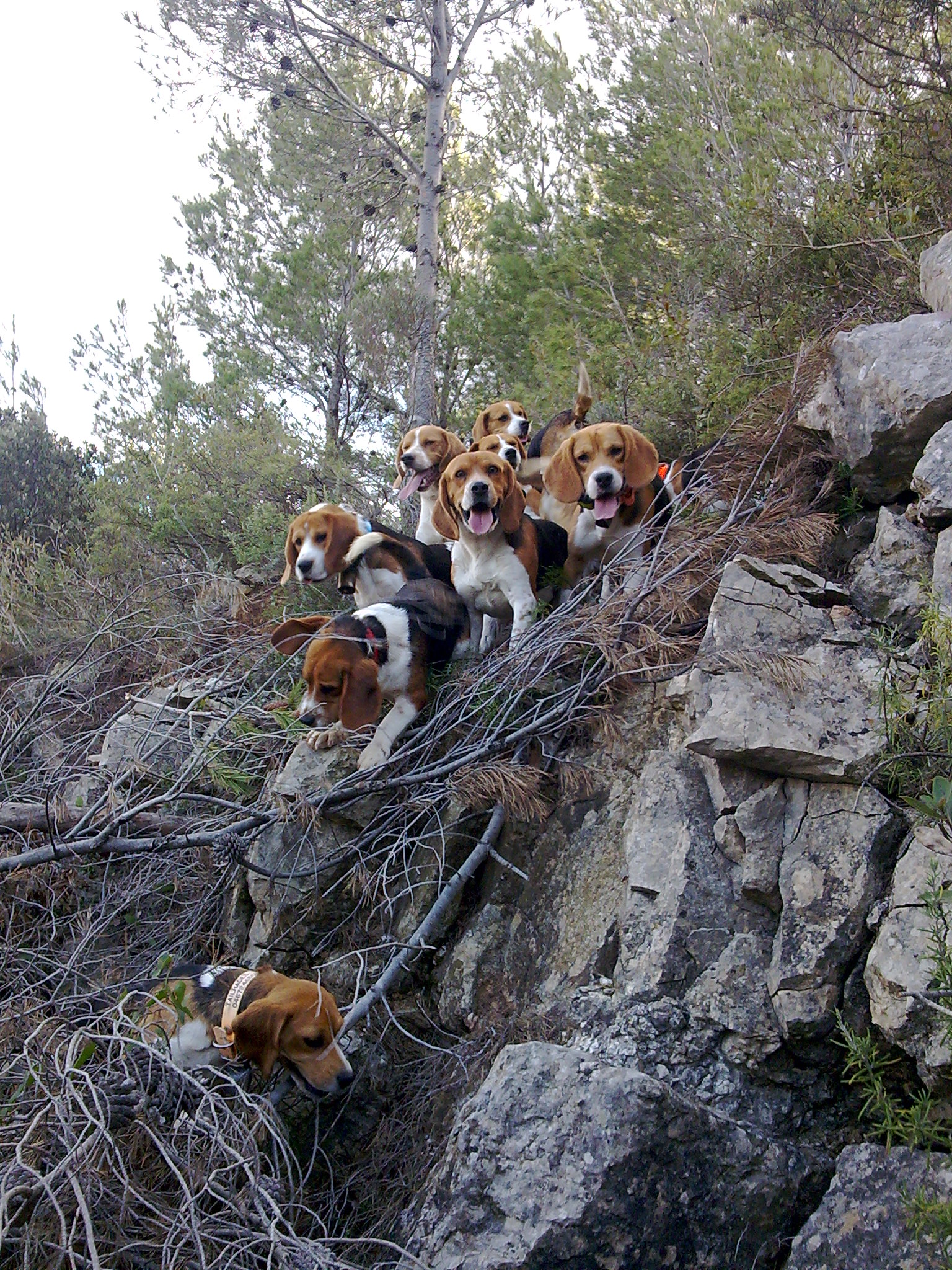 beagle a donner rhône alpes